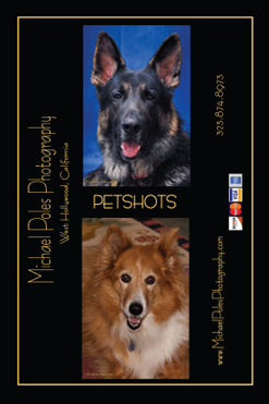 "Download this ""Petshots"" card."